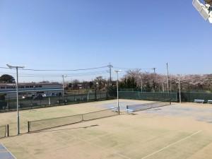 桜3.26