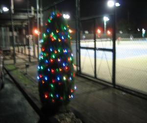 クリスマスツリー点灯式